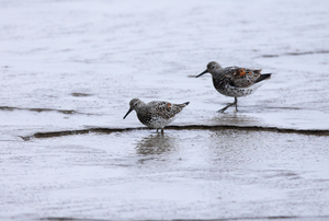 Great Knot by Zhang Ming